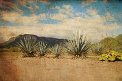 Paesaggio di tequila Fotografie Stock