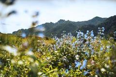 Paesaggio di Tiltshift con i fiori e le montagne di Altai blu Fotografia Stock Libera da Diritti