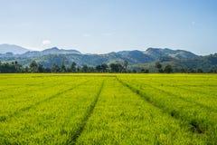 Paesaggio di Toraja Fotografie Stock