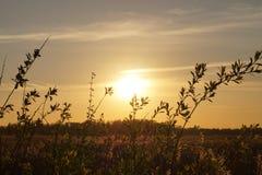 Paesaggio di tramonto con il campo delle piante Fotografia Stock Libera da Diritti