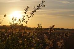 Paesaggio di tramonto con il campo delle piante Fotografie Stock Libere da Diritti