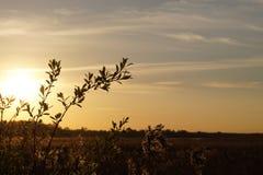 Paesaggio di tramonto con il campo delle piante Fotografia Stock