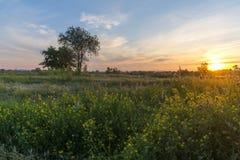 Paesaggio di tramonto con l'albero ed i piccoli fiori immagine stock