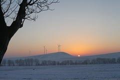 Paesaggio di tramonto degli alberi di inverno Fotografia Stock