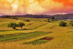 Paesaggio di tramonto del campo di erba Fotografie Stock Libere da Diritti