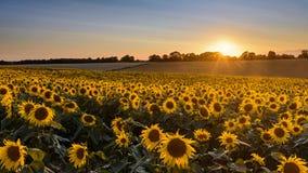 Paesaggio di tramonto del girasole con il tramonto Immagini Stock Libere da Diritti