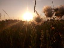 Paesaggio di tramonto della natura dei fiori di Sun Immagini Stock
