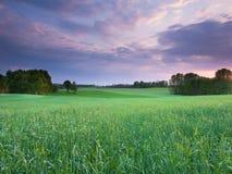 Paesaggio di tramonto della primavera Immagini Stock Libere da Diritti
