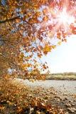 Paesaggio di tramonto di autunno fotografia stock