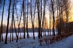 Paesaggio di tramonto di inverno, vista di albero del giardino della neve Immagini Stock
