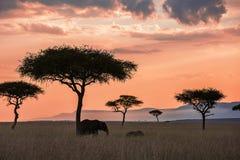 Paesaggio di tramonto di Maasai Mara Fotografie Stock