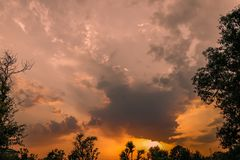 Paesaggio di tramonto sebbene alberi, cielo giallo e nuvole immagine stock libera da diritti