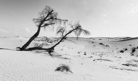 Paesaggio di un albero morto sulla duna del deserto nella conversione artistica Fotografie Stock Libere da Diritti