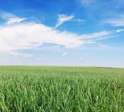 Paesaggio di un campo coltivare Immagini Stock