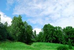 Paesaggio di un campo verde con gli alberi   Fotografie Stock