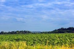 Paesaggio di un campo verde, di una foresta e di un cielo blu nuvoloso Immagine Stock Libera da Diritti