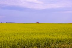Paesaggio di un giacimento del seme di ravizzone di verde giallo con una capanna rossa Fotografia Stock Libera da Diritti