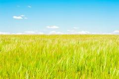 Paesaggio di un giacimento e di un cielo di grano Fotografie Stock Libere da Diritti
