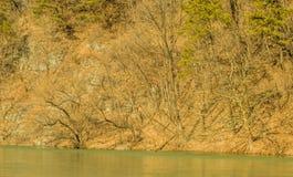 Paesaggio di una linea di costa del fiume con gli alberi e l'alta erba Fotografie Stock