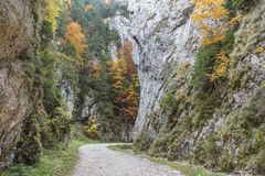 Paesaggio di una strada curva della montagna con la parete ripida e gli alberi varicolored nel giorno di autunno, Romania fotografie stock