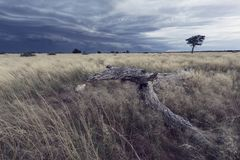 Paesaggio di una tempesta della pioggia che si avvicina sopra l'erba di Kalahari Fotografia Stock Libera da Diritti