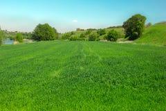 Paesaggio di una valle erbosa verde, degli alberi, delle colline e del cielo blu Fotografia Stock Libera da Diritti