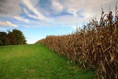 Paesaggio di VA di agricoltura dell'azienda agricola sperimentale di Blandy Immagini Stock