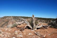 Paesaggio di vecchio albero asciutto in Grand Canyon fotografie stock libere da diritti