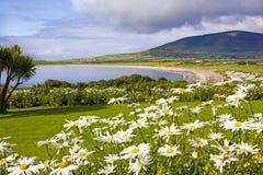 Paesaggio di Ventry, Irlanda Fotografia Stock Libera da Diritti