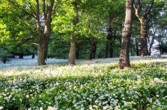 Paesaggio di verde di foresta con l'albero ed i fiori bianchi Fotografie Stock Libere da Diritti