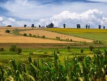 Paesaggio di verdure di estate del cielo e del campo Fotografie Stock Libere da Diritti