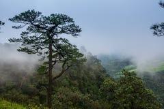 Paesaggio di viaggio - moutain della collina Immagini Stock