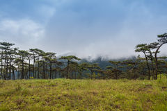 Paesaggio di viaggio - moutain della collina Fotografia Stock Libera da Diritti