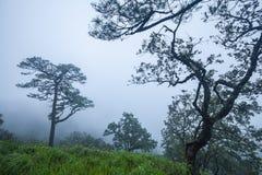 Paesaggio di viaggio - moutain della collina da Phu Soi Dao National Park Fotografia Stock