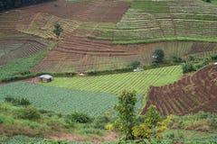 paesaggio di vista di agricoltura Fotografia Stock Libera da Diritti