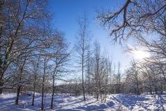 Paesaggio di Wwinter Fotografia Stock