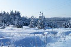 Paesaggio di Ziniy in legno congelato immagini stock