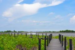 Paesaggio di zona umida in Tailandia orientale fotografia stock