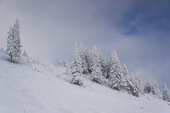 Paesaggio discendente di inverno con gli abeti coperti in neve fotografia stock libera da diritti