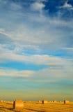 Paesaggio dorato del campo Fotografia Stock