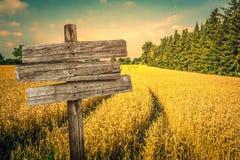 Paesaggio dorato del campo del raccolto Immagine Stock