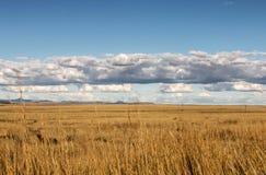 Paesaggio dorato del pascolo di inverno contro cielo blu e le nuvole Fotografia Stock