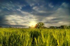 Paesaggio drammatico del cielo dei giacimenti di grano verso luce Fotografia Stock Libera da Diritti
