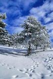 Paesaggio E di inverno Fotografia Stock Libera da Diritti