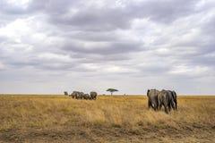 Paesaggio e fauna selvatica in Tanzania - elefante Fotografia Stock Libera da Diritti