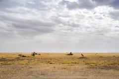Paesaggio e fauna selvatica in Tanzania - elefante Fotografia Stock