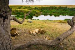 Paesaggio e fauna selvatica in Tanzania - elefante Immagine Stock Libera da Diritti