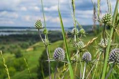 Paesaggio e fiori Fotografia Stock Libera da Diritti