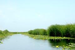 Paesaggio e ninfee gialle piacevoli in canale di delta di Danubio Fotografia Stock