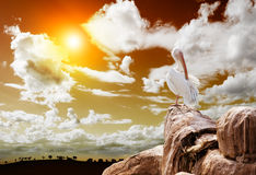 Paesaggio e pellicano Fotografie Stock